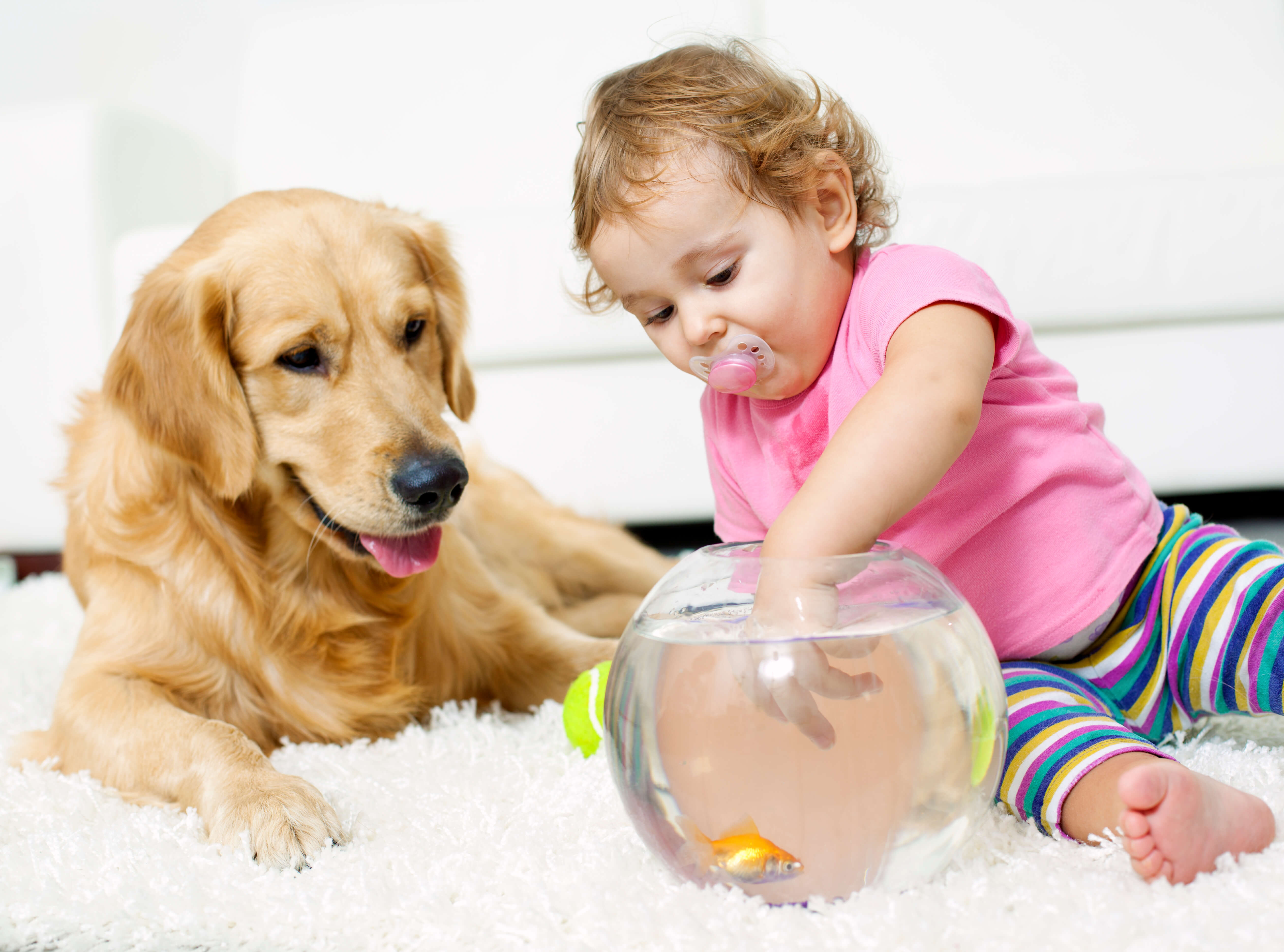 family and pet friendly carpet cleaning greeley