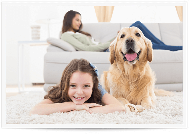 chem-dry Pet Urine Removal colorado