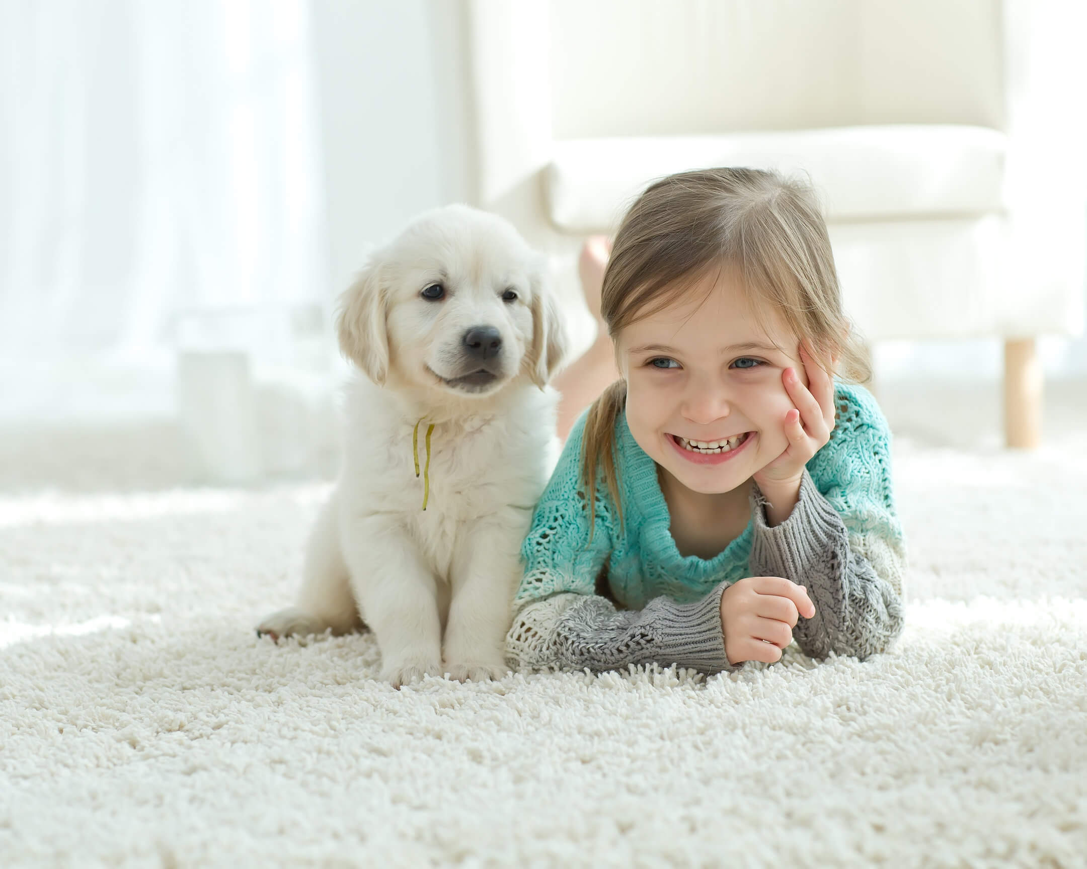 carpet cleaning fort collins