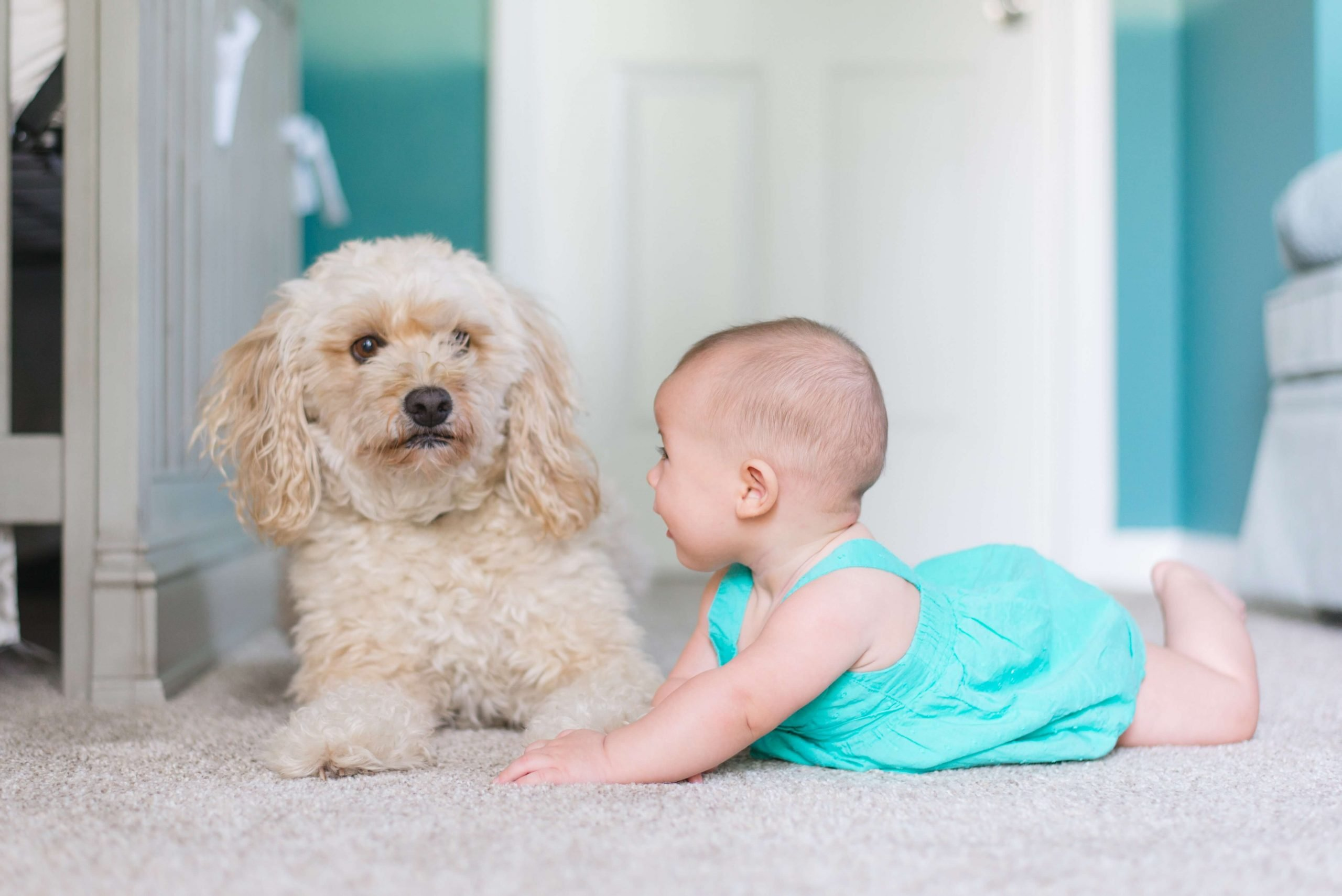 don't skip professional carpet cleaning in fort collins