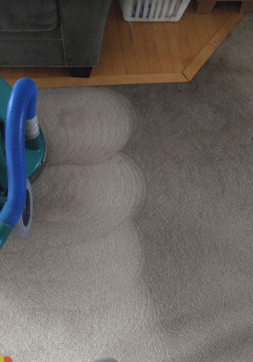 before and after carpet cleaning in fort collins co