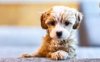 What to Do When Your Dog Pees on Your Carpet